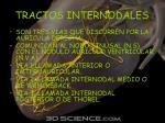 tractos internodales