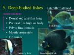 5 deep bodied fishes laterally flattened compressed