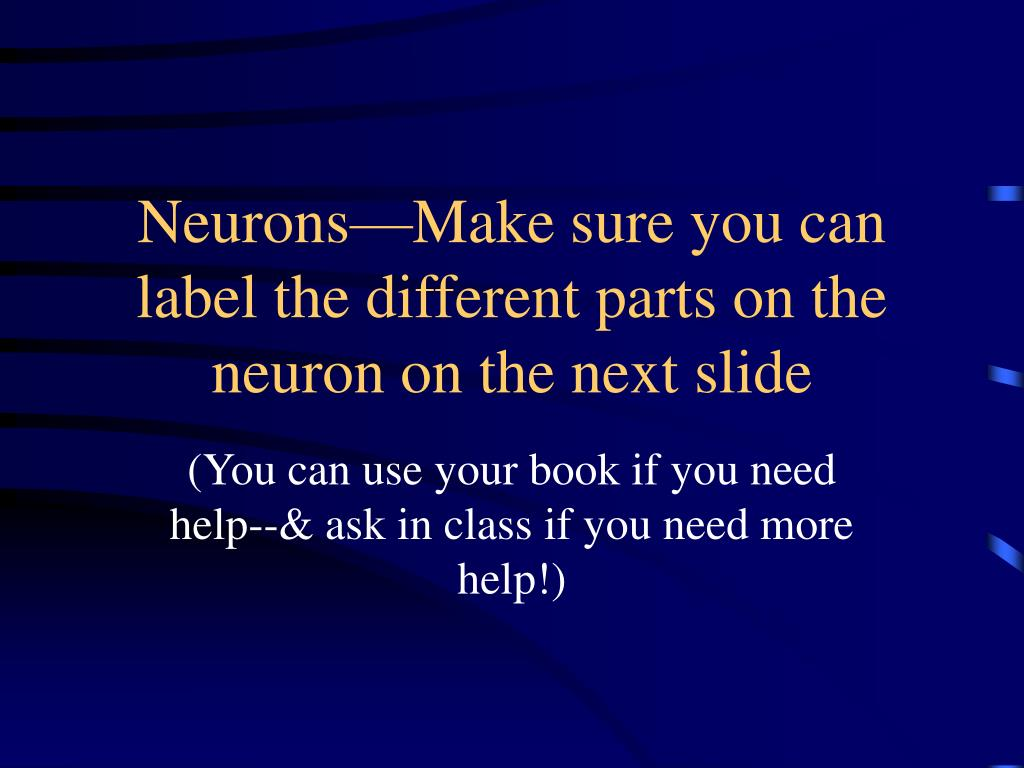 Neurons—Make sure you can label the different parts on the neuron on the next slide