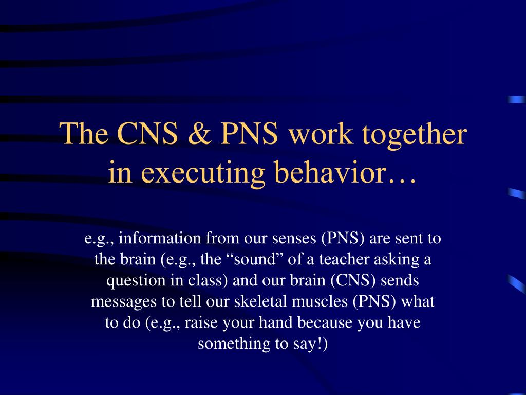 The CNS & PNS work together in executing behavior…