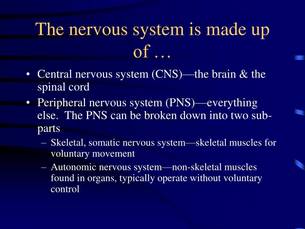 The nervous system is made up of …