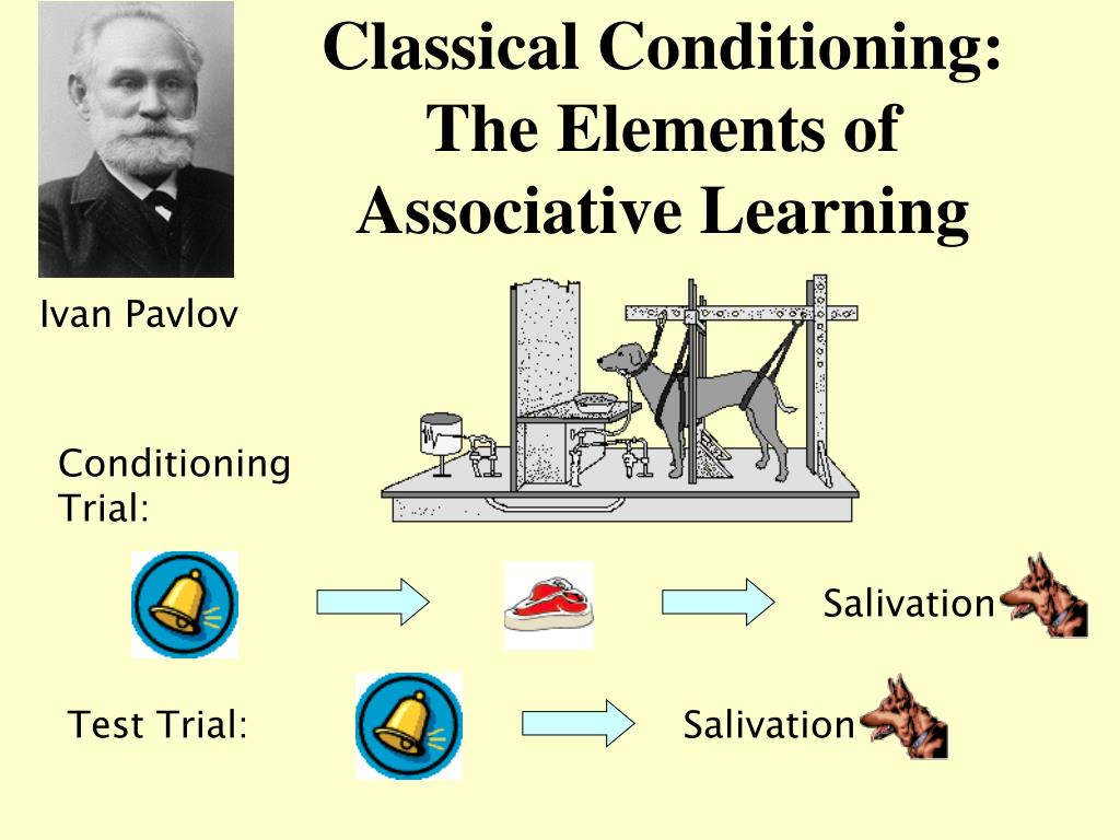 classical conditioning the elements of associative learning l.