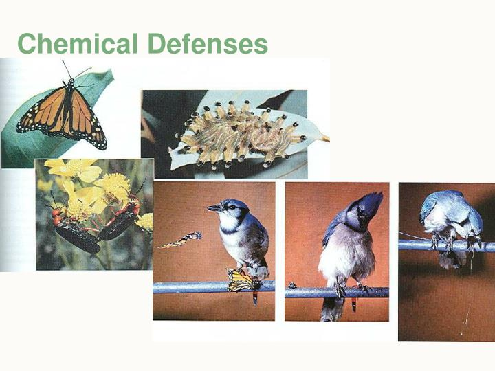 Chemical Defenses