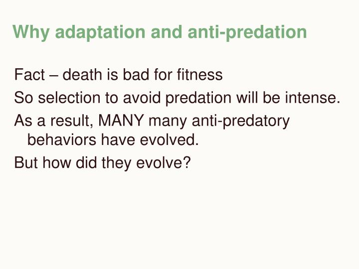 Why adaptation and anti predation
