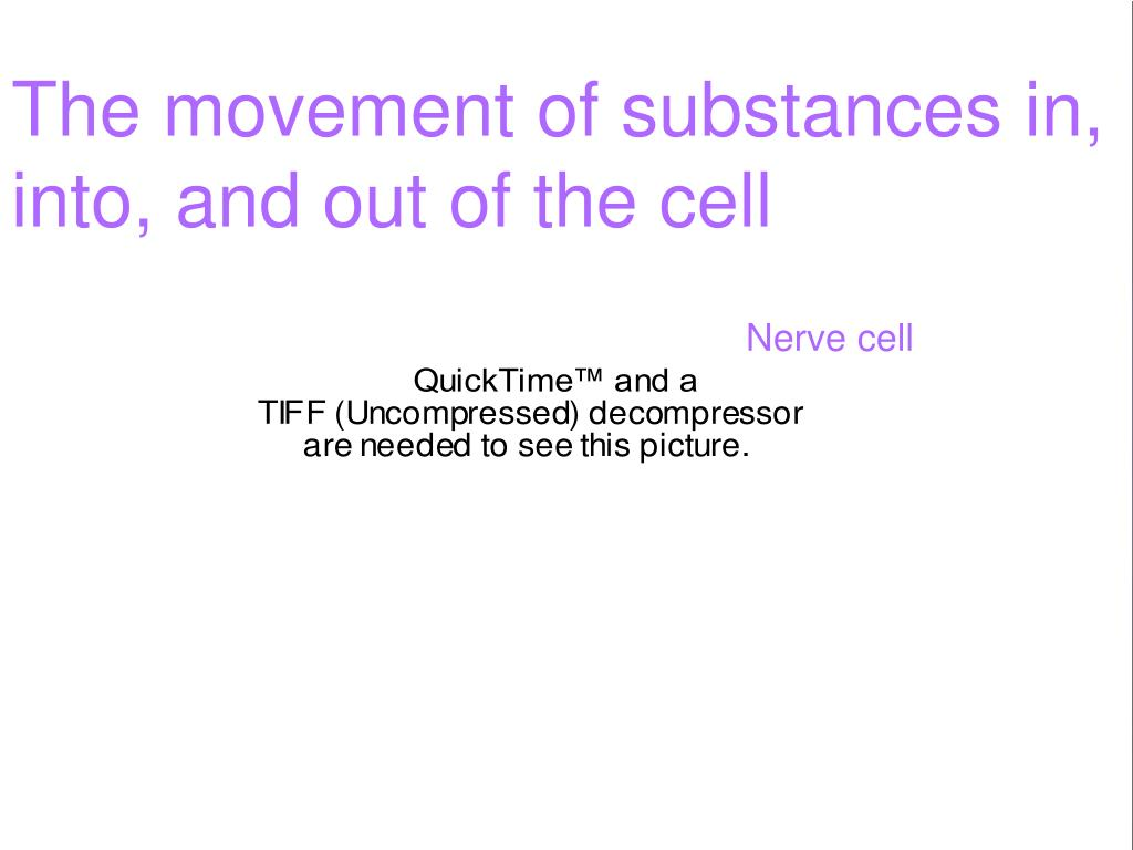 The movement of substances in,