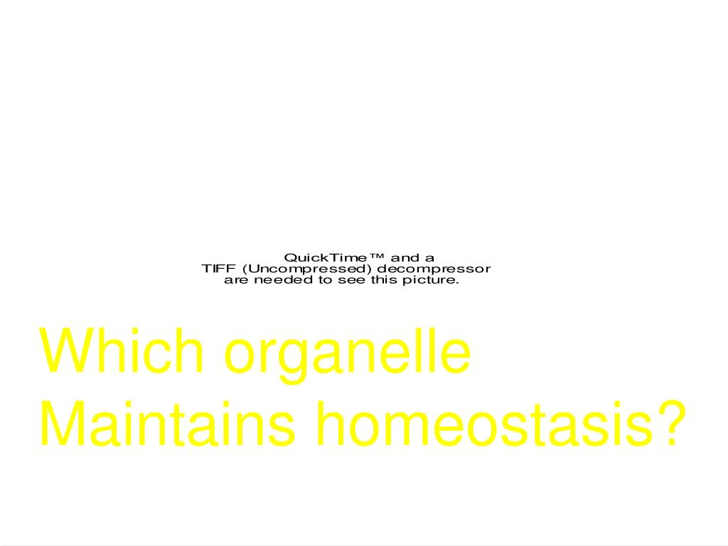 Which organelle