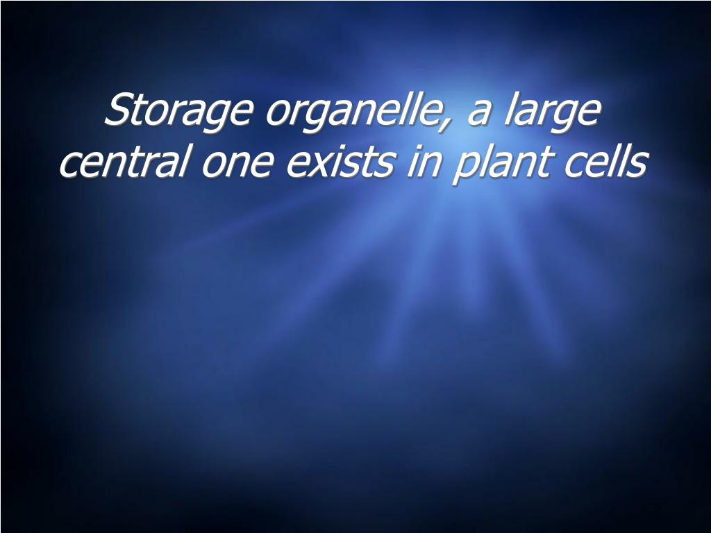 Storage organelle, a large central one exists in plant cells