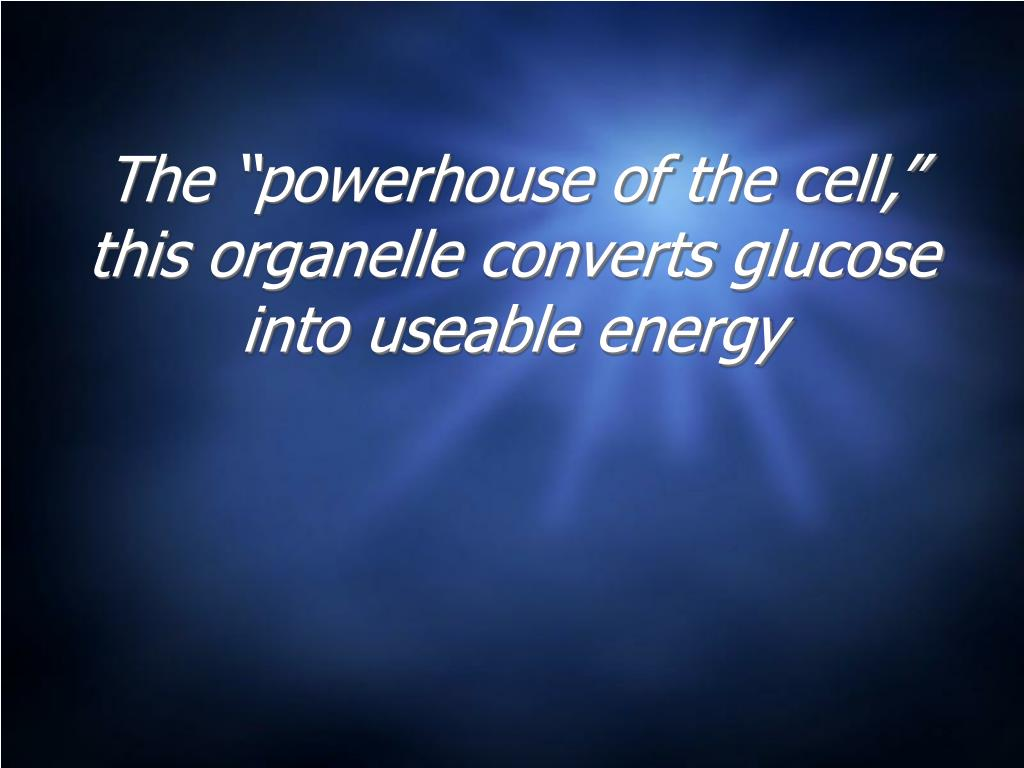 """The """"powerhouse of the cell,"""" this organelle converts glucose into useable energy"""