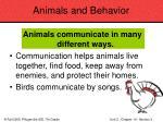 animals and behavior81
