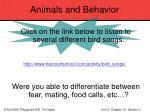 animals and behavior82