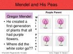 mendel and his peas30