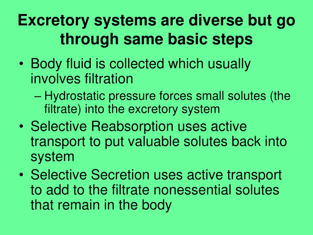 Excretory systems are diverse but go through same basic steps