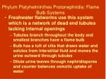 phylum platyhelminthes protonephridia flame bulb systems