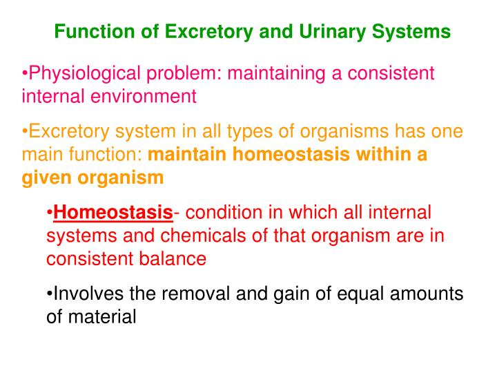 Function of Excretory and Urinary Systems