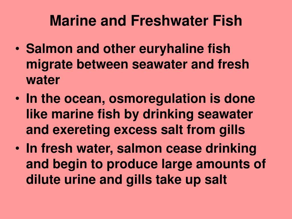 Marine and Freshwater Fish