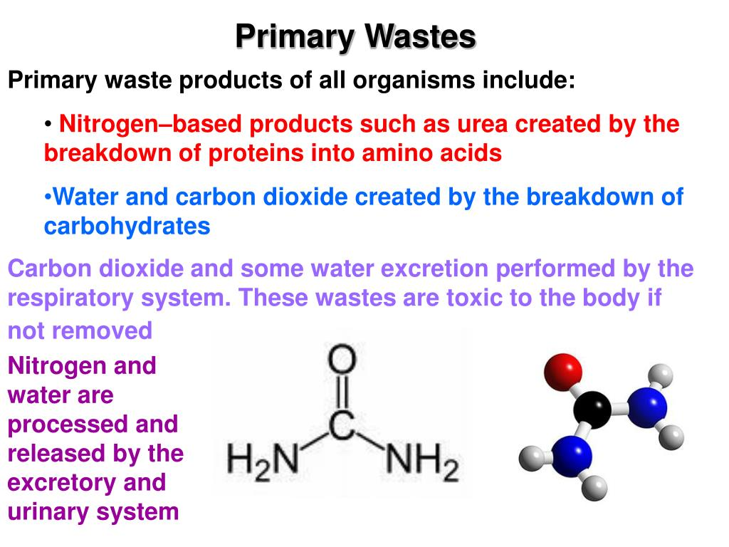 Primary Wastes