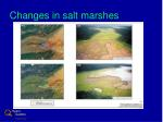 changes in salt marshes