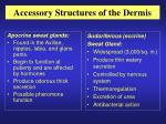 accessory structures of the dermis