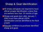 sheep goat identification
