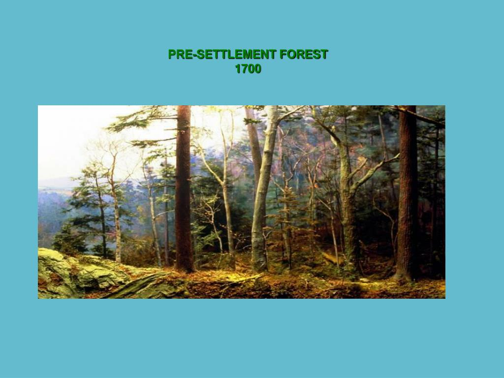 PRE-SETTLEMENT FOREST