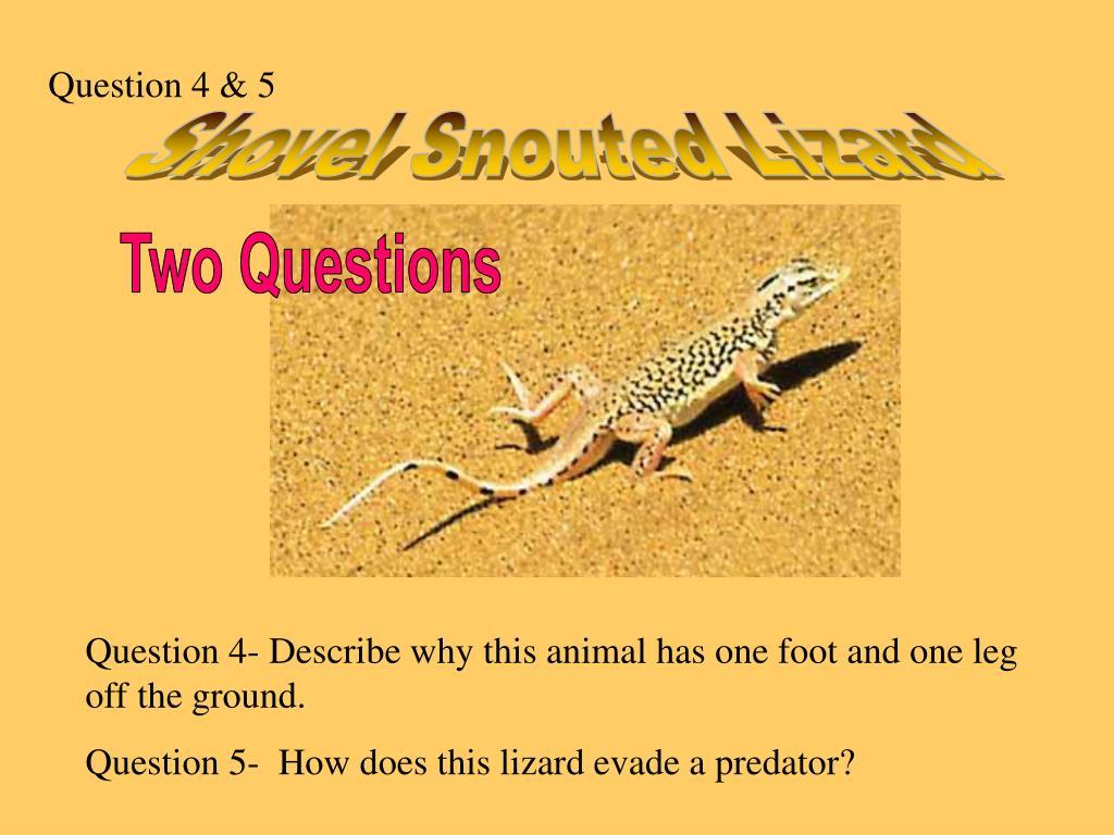 Question 4 & 5