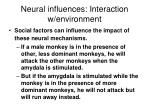 neural influences interaction w environment