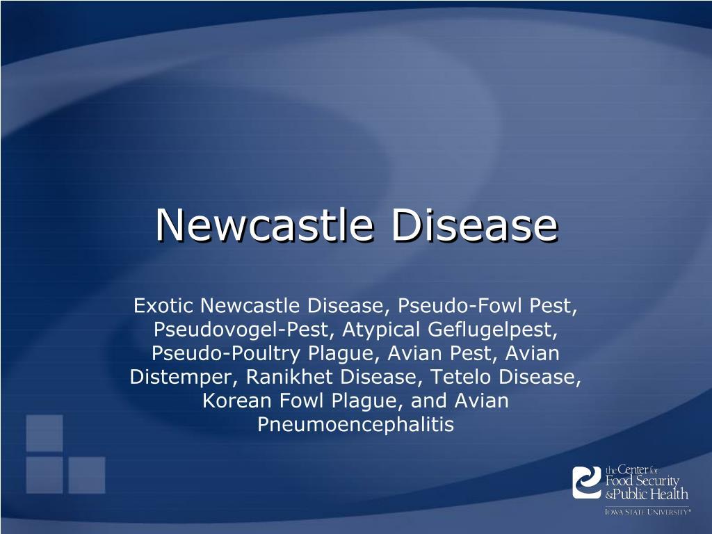newcastle disease l.