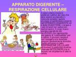 apparato digerente respirazione cellulare