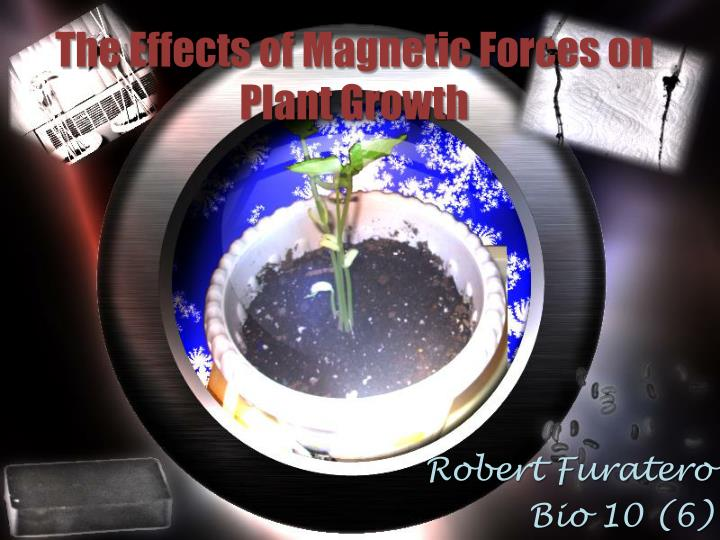 The effects of magnetic forces on plant growth