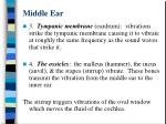 middle ear
