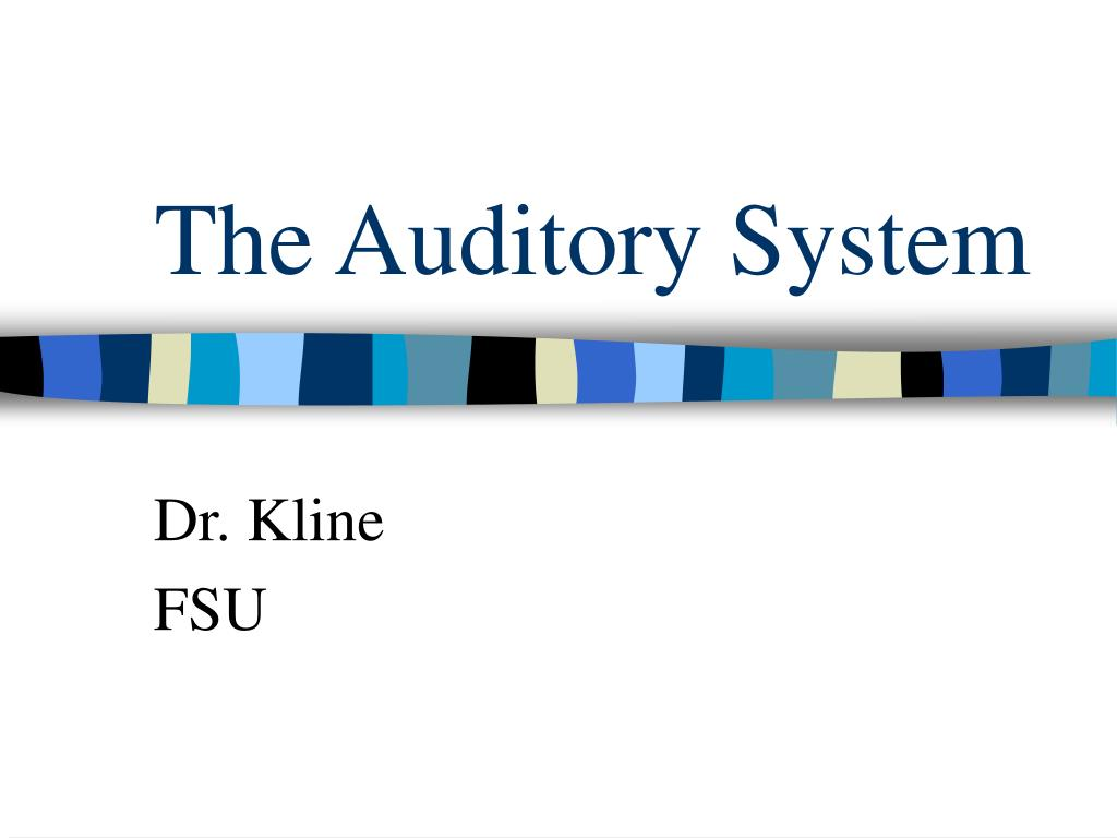 the auditory system l.