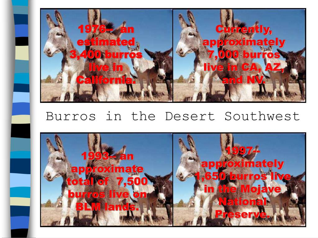 1976--  an estimated 3,400 burros live in California.