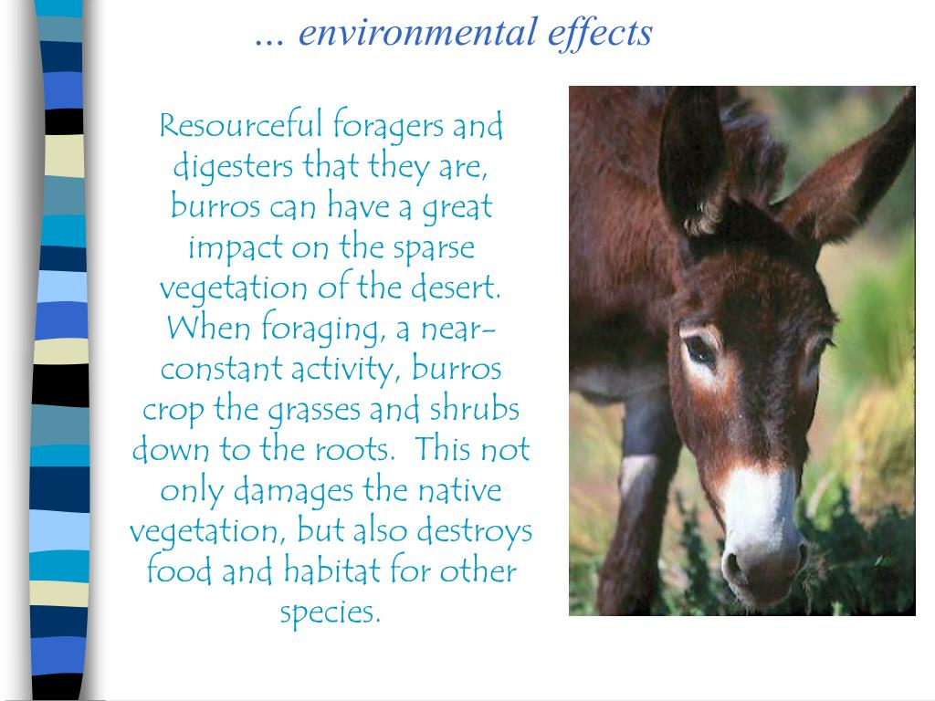 … environmental effects