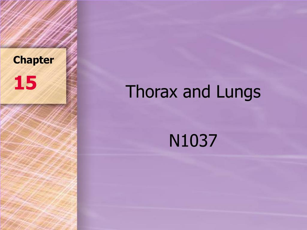 thorax and lungs n1037 l.
