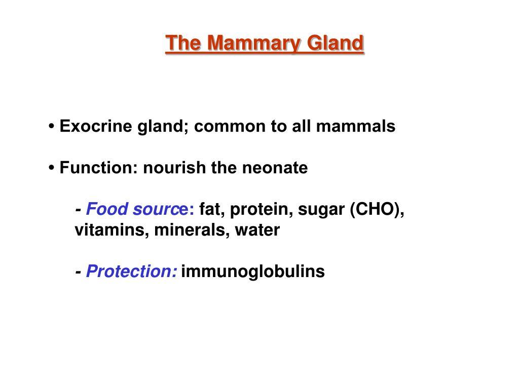 The Mammary Gland