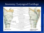 anatomy laryngeal cartilage8