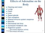effects of adrenaline on the body