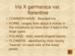 iris x germanica var florentine