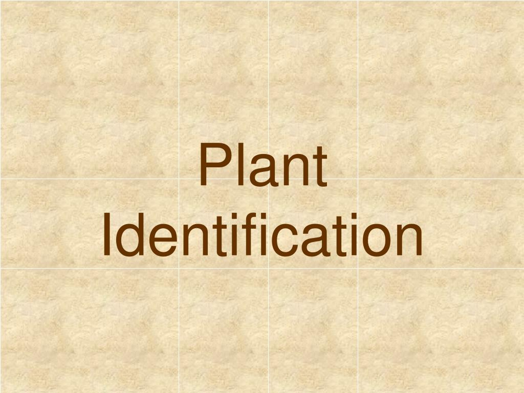 plant identification l.