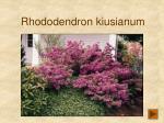 rhododendron kiusianum206