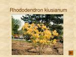 rhododendron kiusianum207