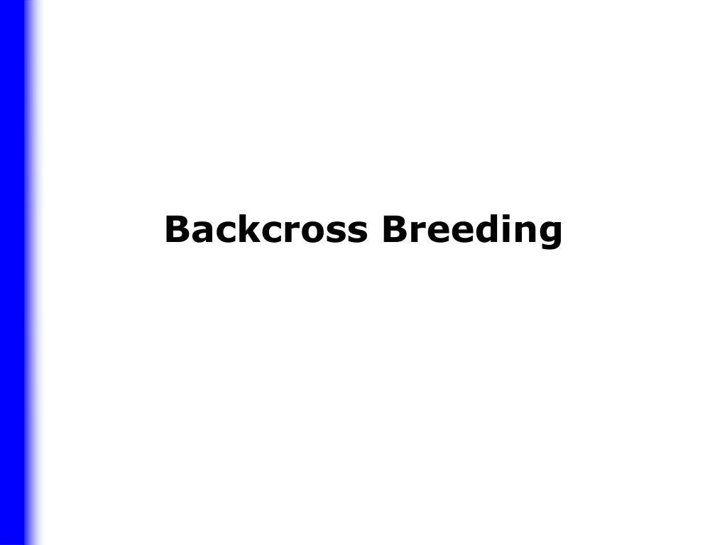 backcross breeding l.