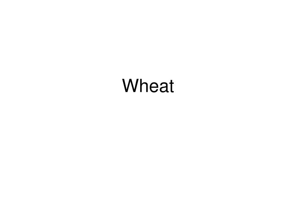 wheat l.