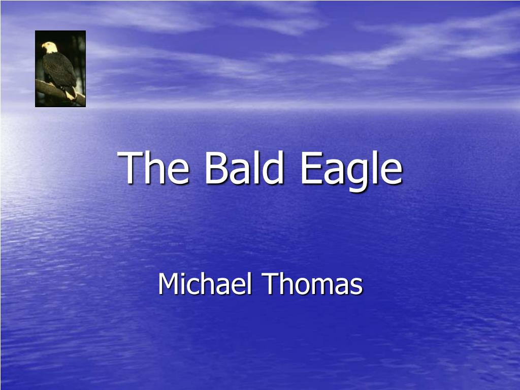 the bald eagle l.