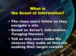 what is the scent of information