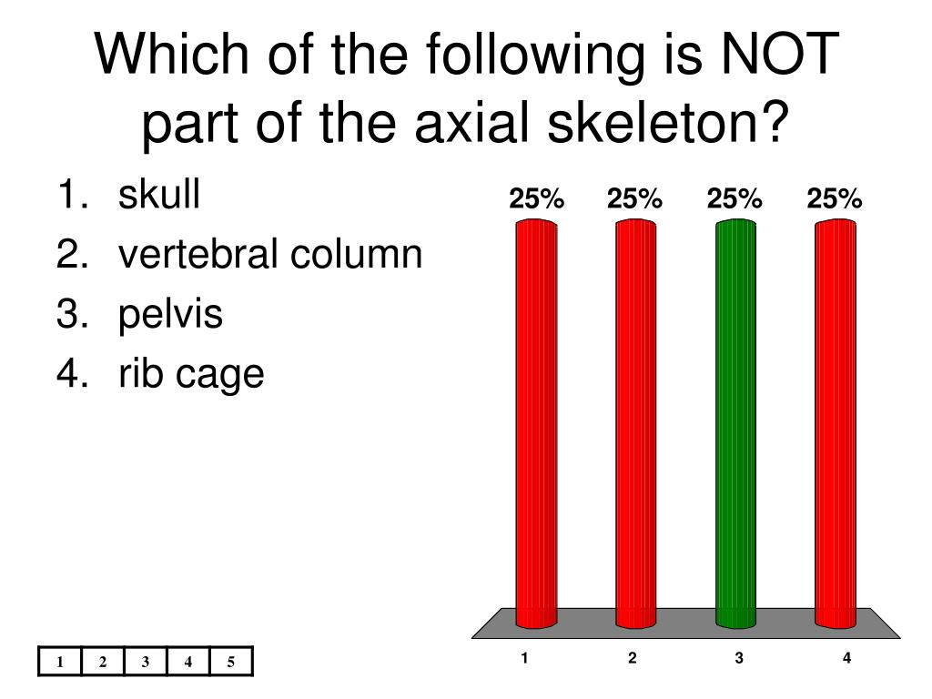 which of the following is not part of the axial skeleton l.