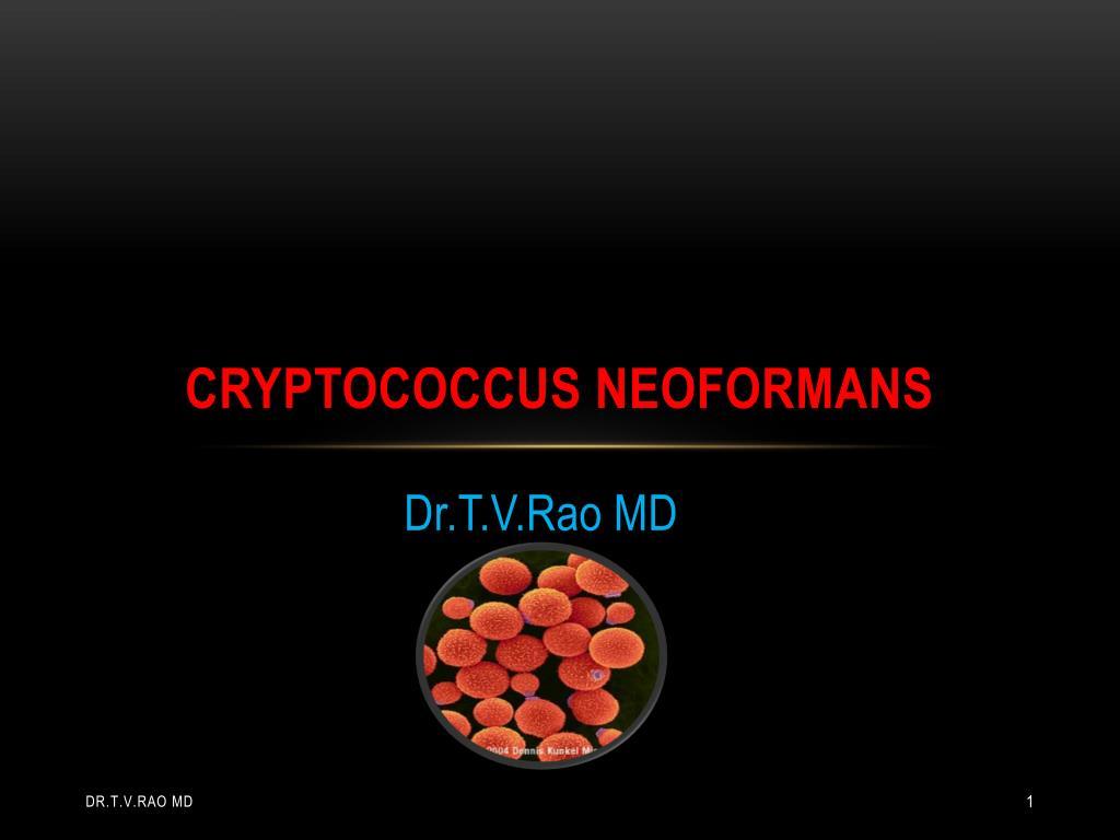 cryptococcus neoformans l.