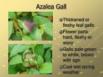 azalea gall