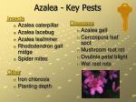 azalea key pests
