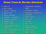 some trees shrubs attacked